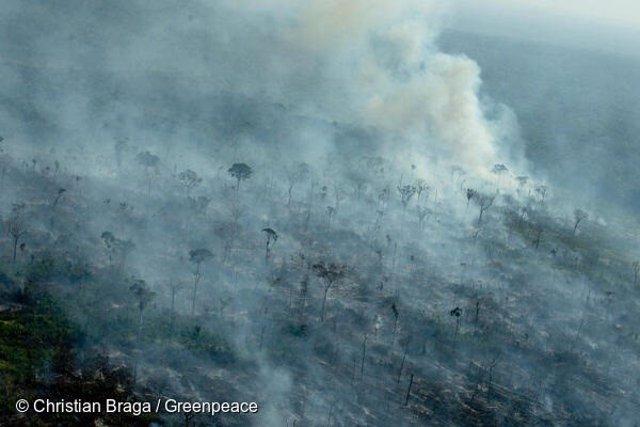 Punts cremats en una àrea recentment desforestada, registrats per Deter 2021 i Prodes 2019, a Apuí, estat d'Amazones.