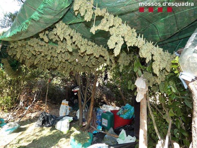 Espai en què habitaven els jardiners i en què es preparava la droga en una de les plantacions.