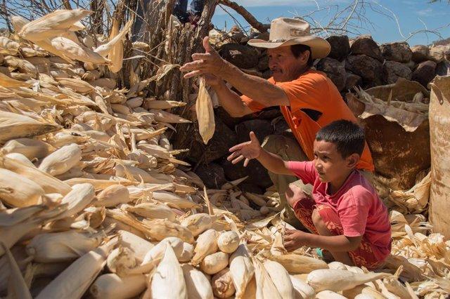 Archivo - Un agricultor y su hijo en Honduras