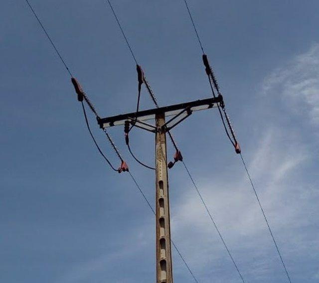 Endesa adecua una línea eléctrica en el Baix Empordà (Girona) para proteger la avifauna.