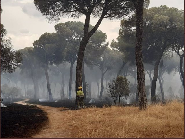 Una imatge d'un bomber en l'incendi del Tremolo.
