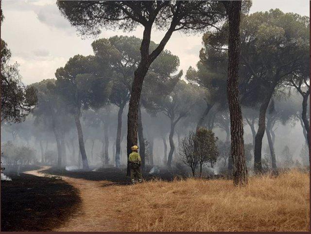 Una imagen de un bombero en el incendio de El Tiemblo.