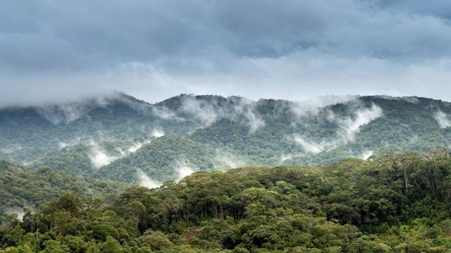Los investigadores de la Universidad de Princeton encontraron que una mayor formación de nubes sobre áreas boscosas sugiere que la reforestación probablemente sería más efectiva para enfriar la atmósfera de la Tierra de lo que se pensaba anteriormente.