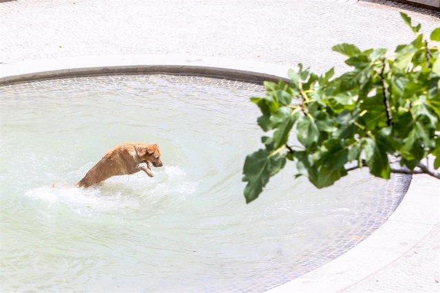 Un perro se moja en una fuente en el parque