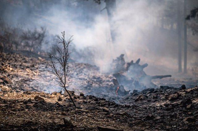 Incendio en el Parque Nacional de Aspromonte, en Calabria (Italia)