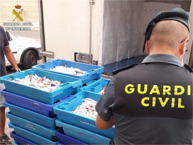 La Guardia Civil interviene media tonelada de pescado ilegal en puertos pesqueros de Alicante