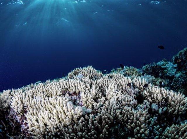 El cambio climático y el calentamiento de los mares están teniendo un impacto devastador en los arrecifes de coral, provocando un blanqueamiento generalizado de los corales como el que se muestra arriba.