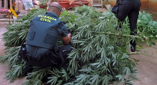 Cultivo plantas de marihuana