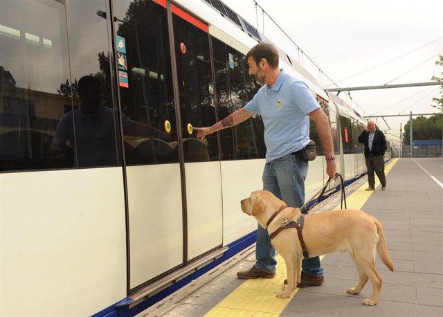 Archivo - Persona ciega con perro guía.