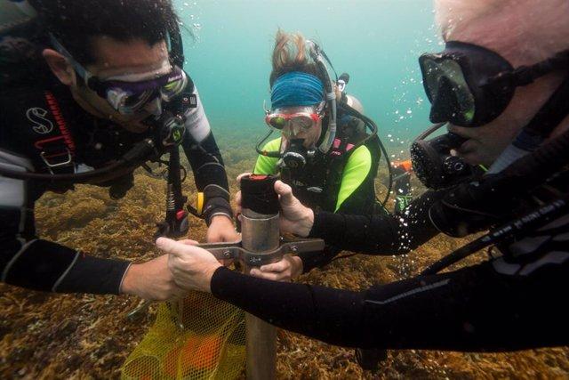 Extracción de muestras de sedimento de los arrecifes de coral del Caribe para averiguar los efectos que han tenido en ellos la actividad humana históricamente.