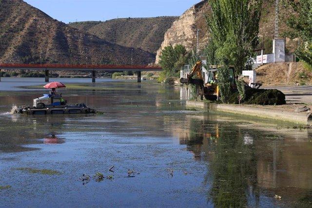 El Ayuntamiento de Mequinenza retira algas y macrófitos del tramo final del Segre.