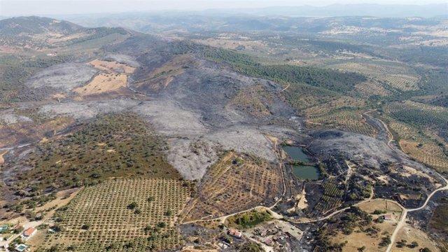 Incendio forestal en el término de Alcaracejos con los olivares de sierra como barrera.