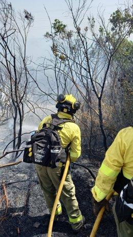 Efectivos de Infoca actuando en el incendio de Tarifa.