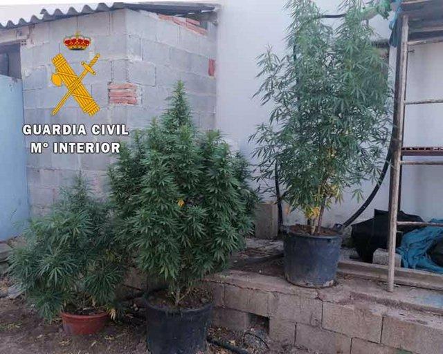 Plantación de marihuana localizada por los agentes en Alcalá la Real.