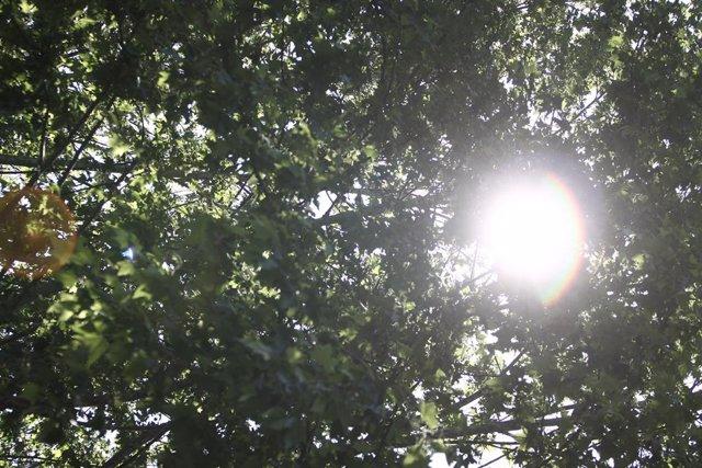 Archivo - Arxivo - Imatge del sol entre fulles d'arbres