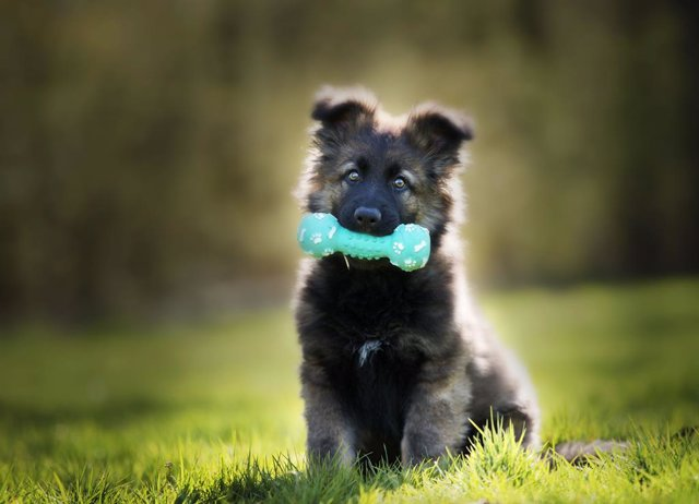 El Condroprotector para cachorros MSM Barakaldo Plus es perfecto
