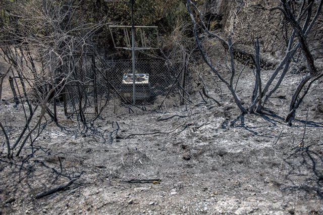 16 August 2021, Italy, Linguaglossa: A view of a scorched area after a large forest fire was devouring hectares of centuries-old pine forest on the north side of the volcano. Photo: Vito Finocchiaro/ZUMA Press Wire/dpa