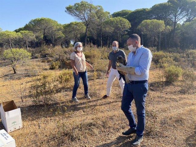 El delegado territorial de Desarrollo Sostenible en Huelva, José Enrique Borrallo, con una de las águilas liberadas en Cartaya (Huelva).