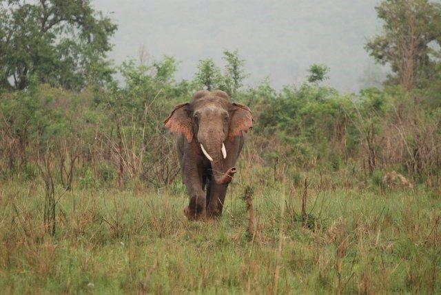 Archivo -     Los cazadores furtivos han matado en las últimas semanas a 28 elefantes del bosque en peligro de extinción en los parques nacionales de Nki y Lobeke, en el sureste de Camerún, según dijo el miércoles la organización ecologista WWF