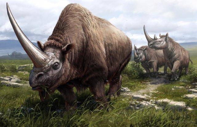 Archivo - Ilustración de tres especies extintas de rinocerontes cuyos genomas fueron secuenciados como parte del estudio. En primer plano, un unicornio siberiano (Elasmotherium sibiricum) y muy cerca dos rinocerontes de Merck (Stephanorhinus kirchbergensi