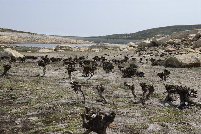 Vista general sobre el estado del embalse de Cenza en la cuenca Miño-Sil, a 24 de agosto de 2021, en Galicia, (España). En Salas -en Ourense-, los informes de la Xunta de Galicia indican que su actual nivel de ocupación es del 27,3%. En el caso de Portas