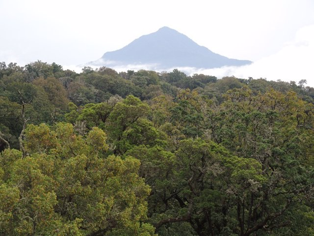Montane forest in Cameroon