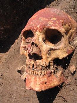 Archivo - Cráneo humano Edad de Bronce de la cultura Yamnaya pintado con ocre rojo