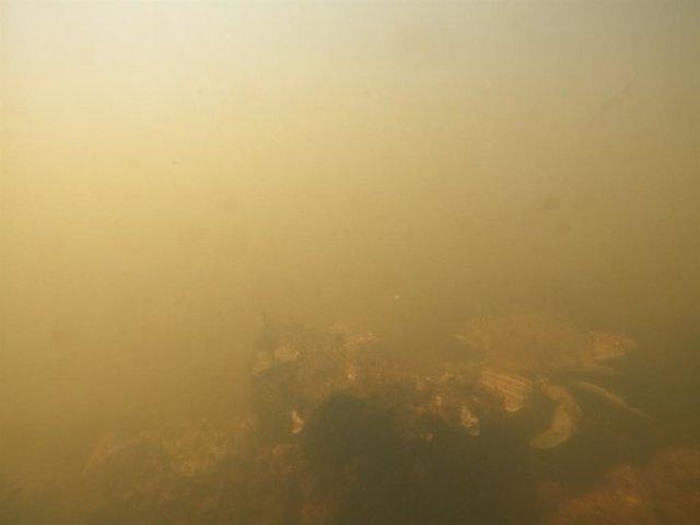 Imágenes del viernes 20 de agosto al norte de la isla del Sujeto (cubeta sur) ANSE WWF.JPG