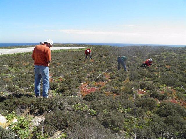 Archivo - Técnicos de Medio Ambiente trabajan en la Isla de Alborán