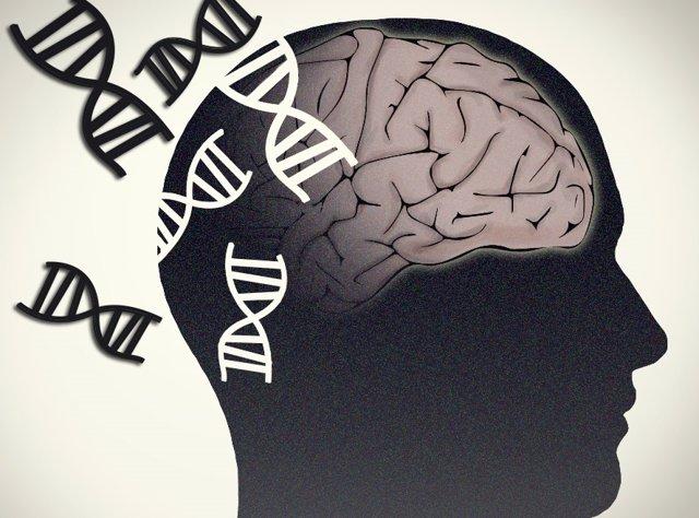 Archivo - Alzheimer, Parkinson. Cerebro y genética.
