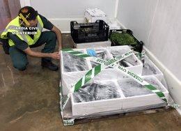 Guardia Civil interviene más de 100 kilos de vario