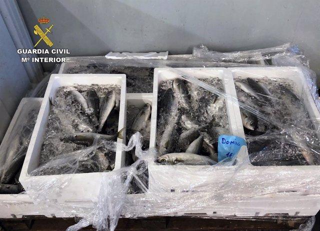 Guardia Civil interviene más de 100 kilos de varios productos pesqueros en la lonja de Alcantarilla