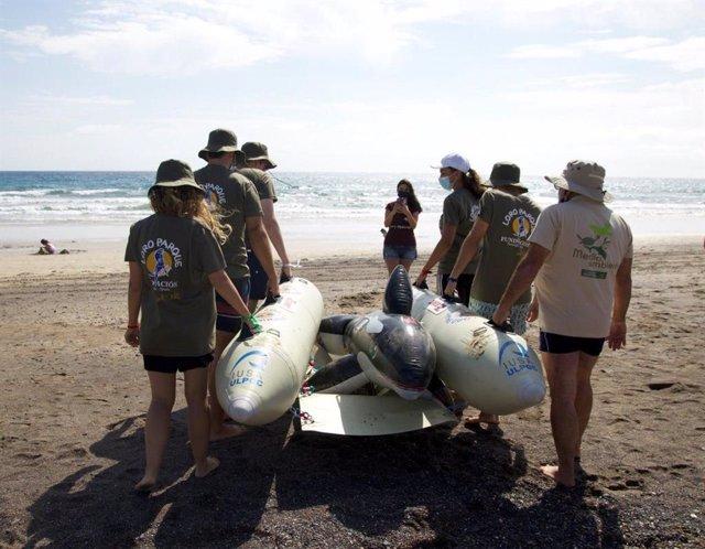 Voluntarios realizan un simulacro de varamiento masivo de cetáceos