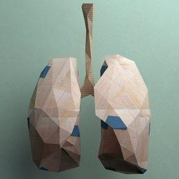 Archivo - Pulmón, pulmones.