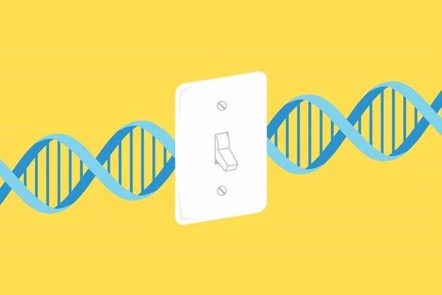 Archivo - Desactivar genes