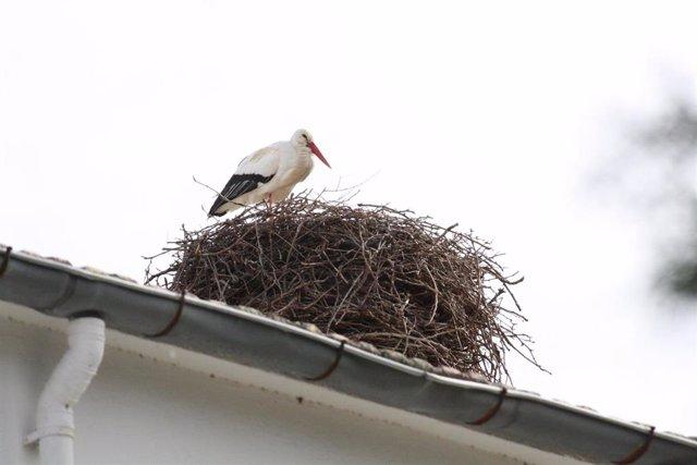 Archivo - Imagen de una cigüeña en su nido