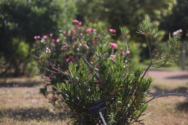 Archivo - Plantas del Real Jardín Botánico Juan Carlos I de la Universidad de Alcalá, que reabrió sus puertas esta semana tras más de dos meses y medio sin recibir visitantes y desde ahora abrirá todos los días, fines de semana incluidos, adoptado las med