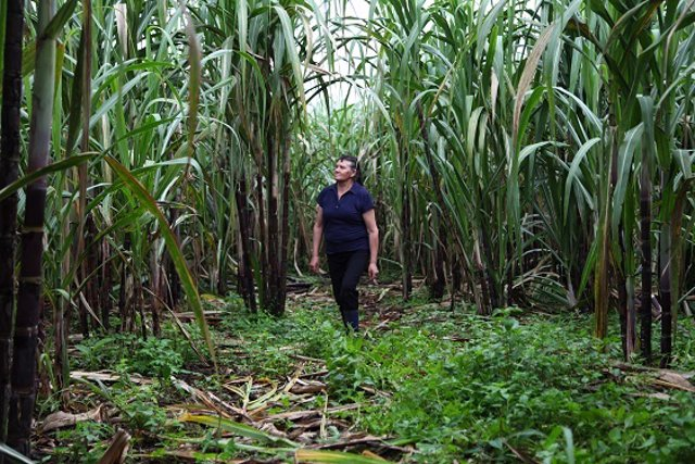 Archivo - Campaña Fundación Codespa Selva Ecuador