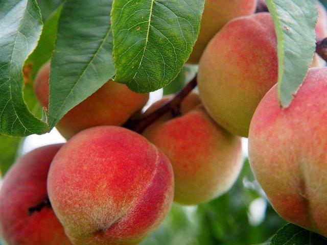Archivo - Fruta de hueso
