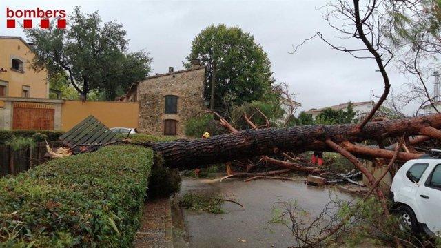 Un arbol caigut per les fortes pluges a Bordils (Girona)
