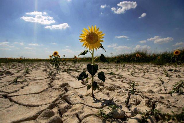 Archivo - Desertización. Sequía. Ola de calor. Cambio climático