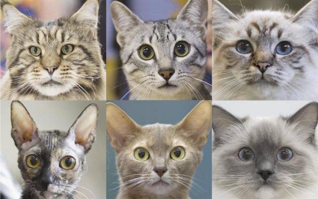 Expresiones faciales de gatos