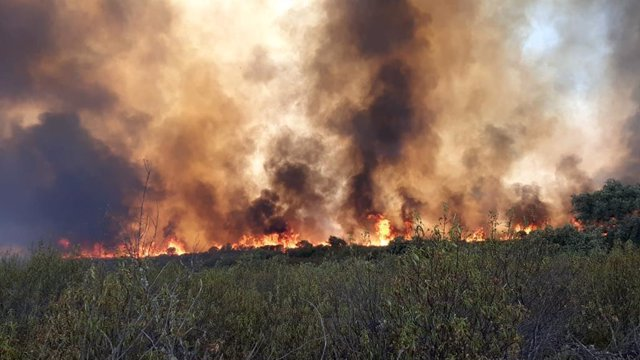Imagen del incendio forestal en el Puerto del Calatraveño del pasado agosto.
