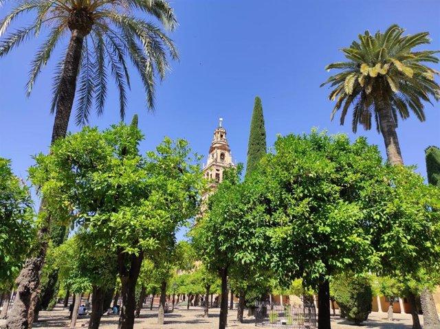 Imagen del Patio de los Naranjos de la Mezquita-Catedral de Córdoba.