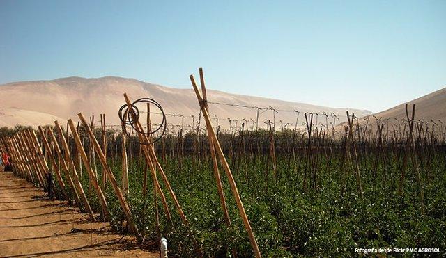 Archivo - Región agrícola chilena