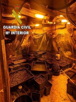Plantación de marihuana desmantelada por la Guardia Civil en la provincia de Guadalajara