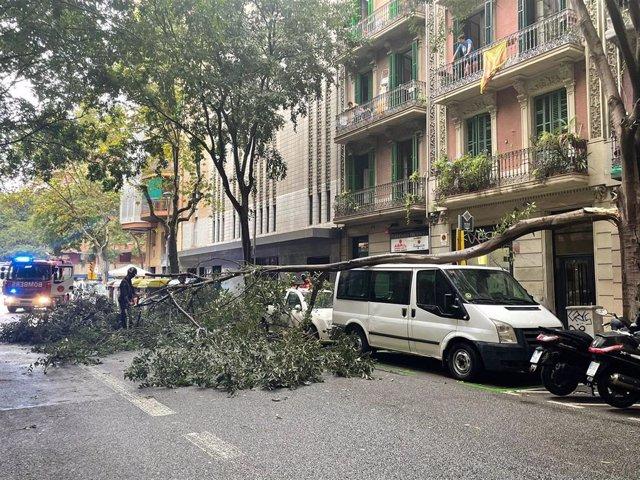 Imagen de un árbol encima de una furgoneta a causa de las lluvias en Barcelona