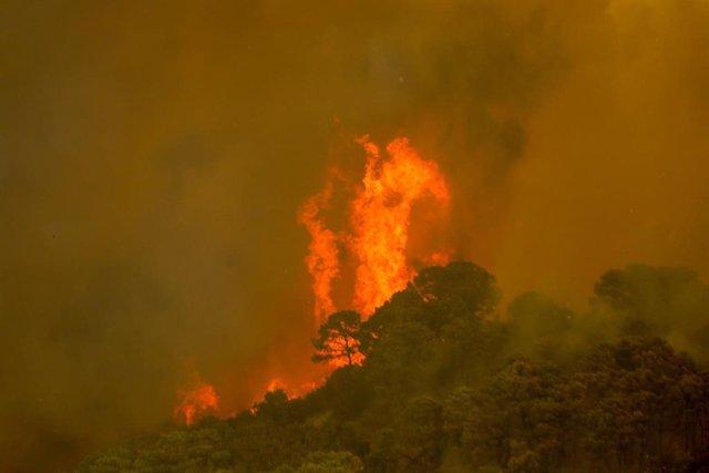 Imagen de archivo del incendio de Sierra Bermeja
