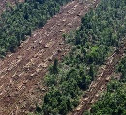 Archivo - Arxiu - Tala de fusta d'un bosc tropical d'Indonèsia