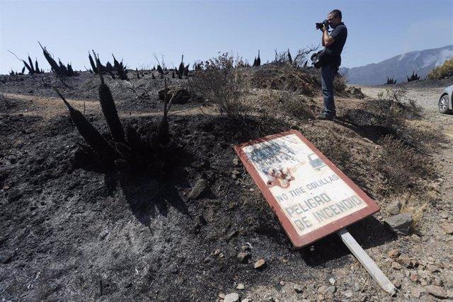 Parajes quemados en el que los medios aéreos y terrestres continúan este sábado luchando contra el incendio en Sierra Bermeja, que se declaró este pasado miércoles y sigue activo. El fuego, por el que se ha activado el nivel 2 del Plan Infoca, afecta a va